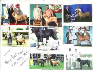 Email para Hans Muller com fotos de cães - pag 2 - 29-03-10