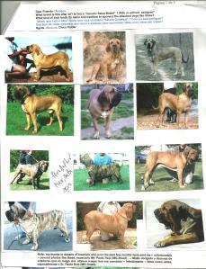 Email sobre cães do tipo Salada Genética - Fotos 1 - 31-03-10