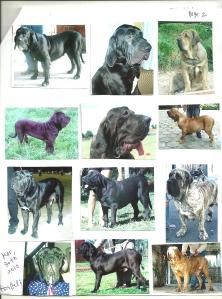 Email sobre cães do tipo Salada Genética - Fotos 2 - 31-03-10