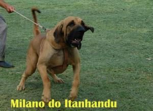 Milano do Itanhandu - 7