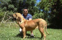 23 - Jose Loisi