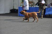 Foto nº 5 - Expo  Gollhofen - 12-04-14