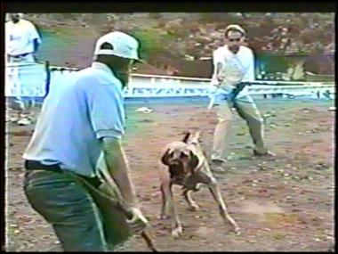 2 - Jonas como cobaia - 1993