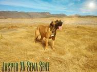 Fila Típico 14 Roberto Sene
