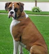 Boxer 2