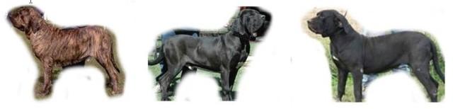 C - Cão quadro 2