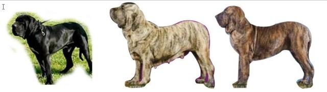 C - Cão quadro 3