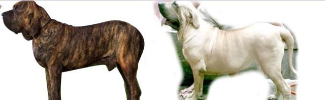 C - Cão quadro 4
