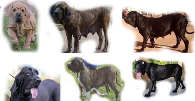 C - Cão quadro - 2