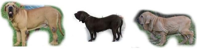 C - Cão quadro - 3