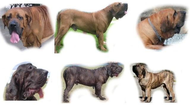 Cão - quadro 1