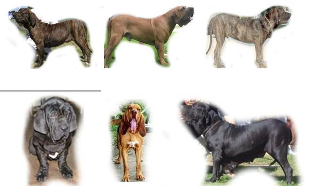 Cão quadro 1