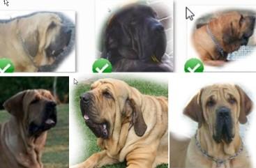 A - Cão quadro 2