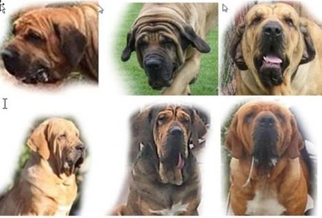 A - Cão quadro 1