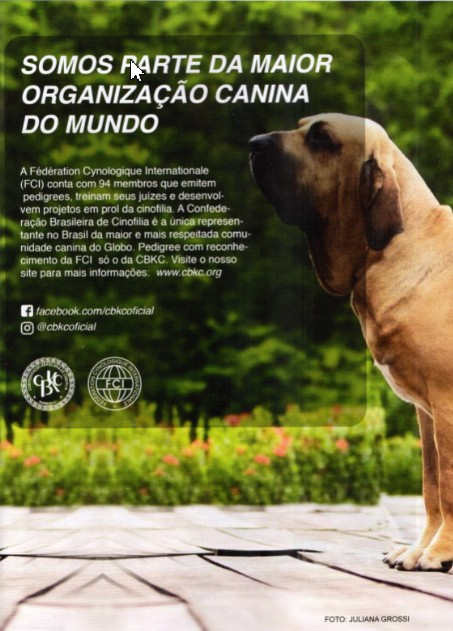 d4c52756e7b4 As far as the forgotten Fila Brasileiro is concerned