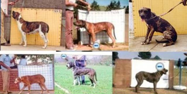 1 - a - 18 a - cães reprovados aft