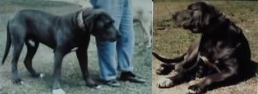 1 - a - 9 a- dois cães pretos