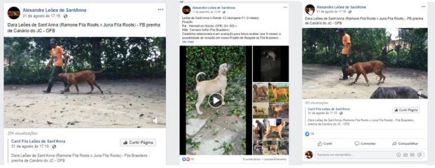 1 - Tres postagens Leão Santanna venda ninhada OFB + FB