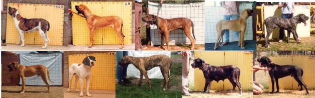 2 - Cães reprovados AFT x sobraci