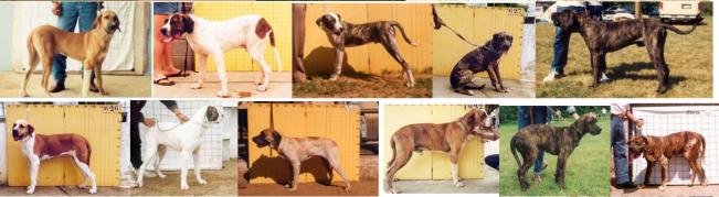 3 - Cães reprovados AFT x sobraci