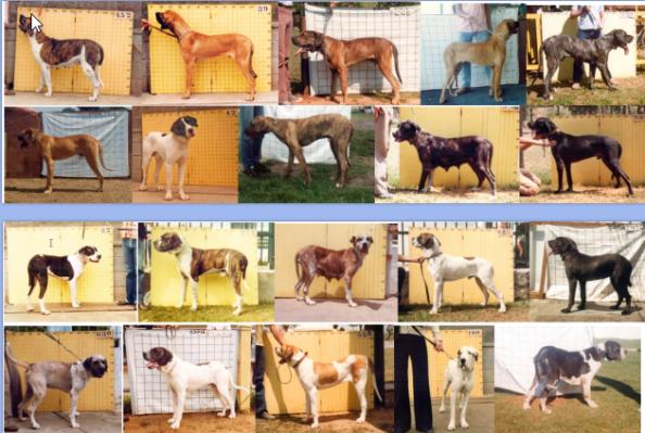 29 - Cães Reprovados em AFT