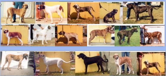 30 - Cães Reprovados em AFT