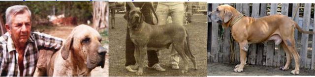 56 - Tres cães ok para Toninho